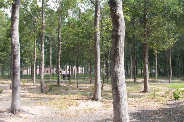 Ngôi chùa và những hàng cây